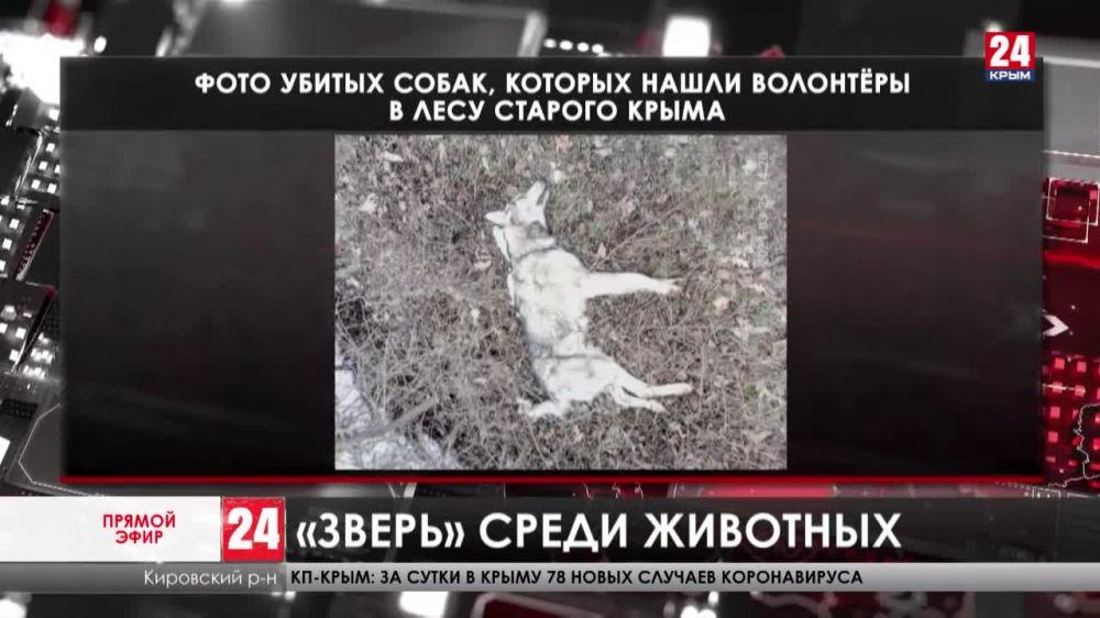 История, от которой кровь стынет в жилах. Кто зверки расправился с бездомными собаками в лесу Старого Крыма?