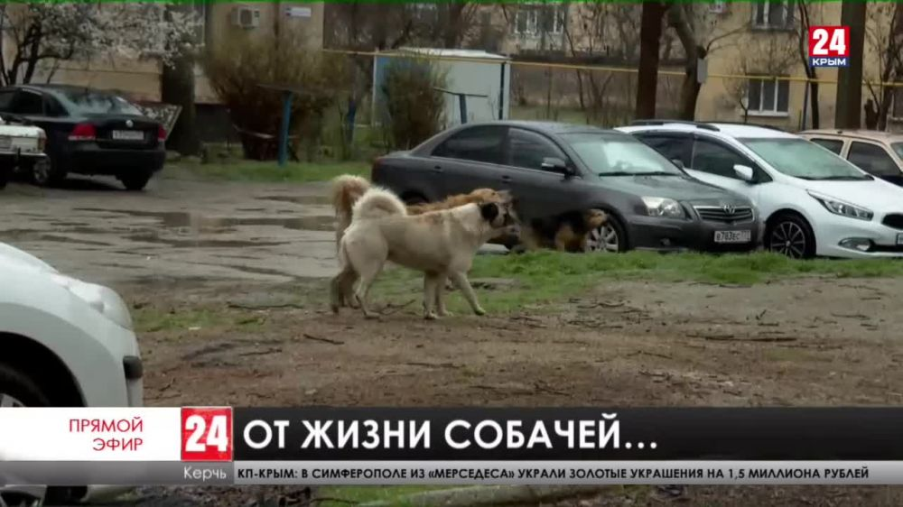 На улицах Керчи по самым грубым подсчетам живут около семи тысяч бродячих собак