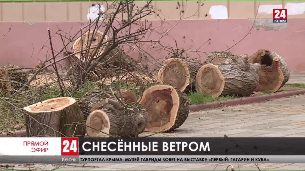 Кто ответит за то, что на керчанку с ребенком рухнуло сухое дерево?