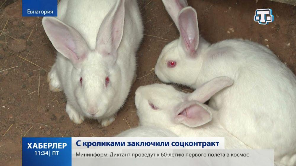 Житель Евпатории получил 250 тыс. рублей на открытие кроличьей фермы