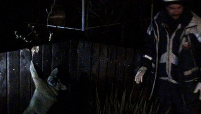На Кубани спасатели вытащили застрявшую в заборе собаку