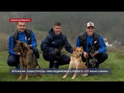 Игроки ФК «Севастополь» присоединились к проекту «Тут ваша собака»