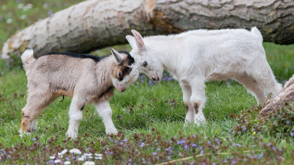 Минимущество Крыма предоставит в аренду земельный участок для выпаса сельскохозяйственных животных