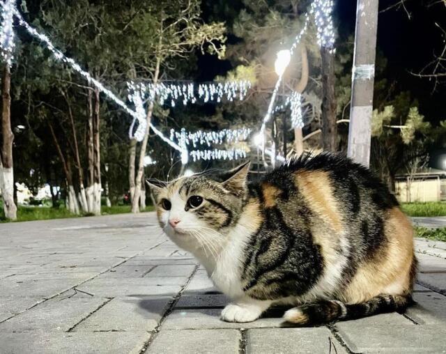 Сквер в Бахчисарае украсили иллюминацией