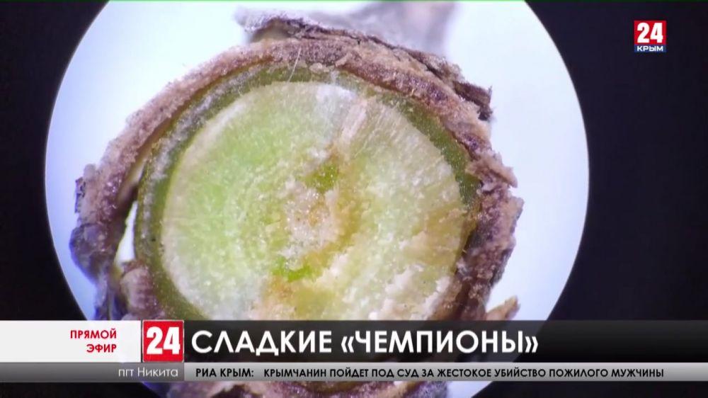 Учёные Никитского ботанического сада вывели сверхурожайные сорта «солнечных» фруктов