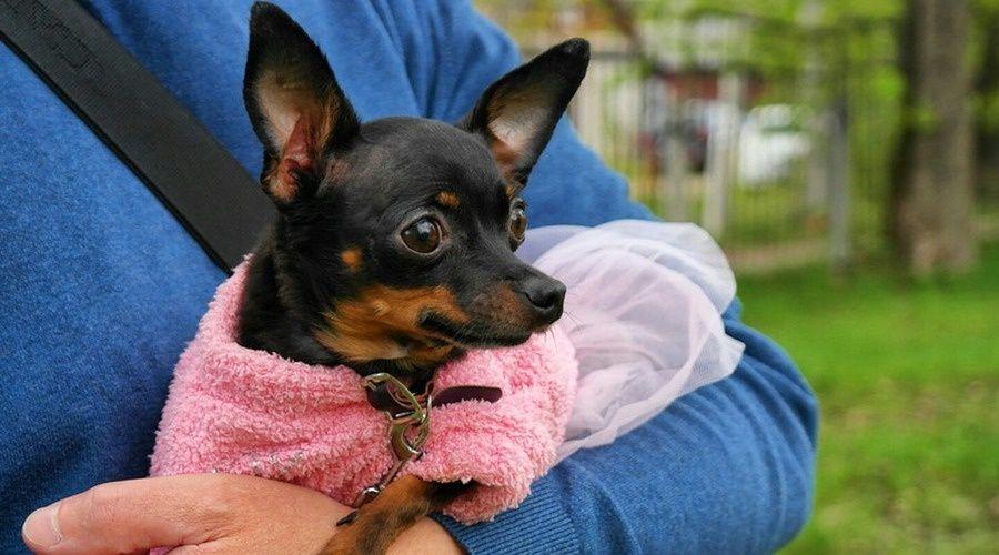 Правительство РФ согласовало нормы об обязательной маркировке домашних животных