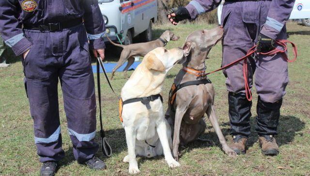 В Крыму собак учат искать людей под завалами и в лесу - фото