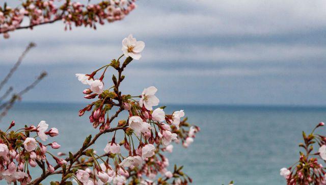 Возможны дожди: какой будет погода в Крыму в пятницу