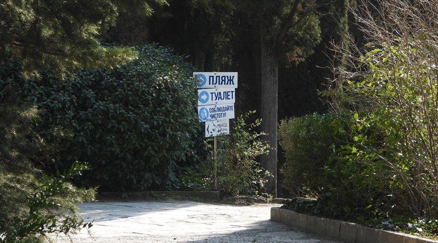 Компенсационная высадка деревьев в Форосском парке начнётся осенью