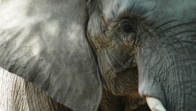 В крымский парк львов приехали слонихи на почетную пенсию