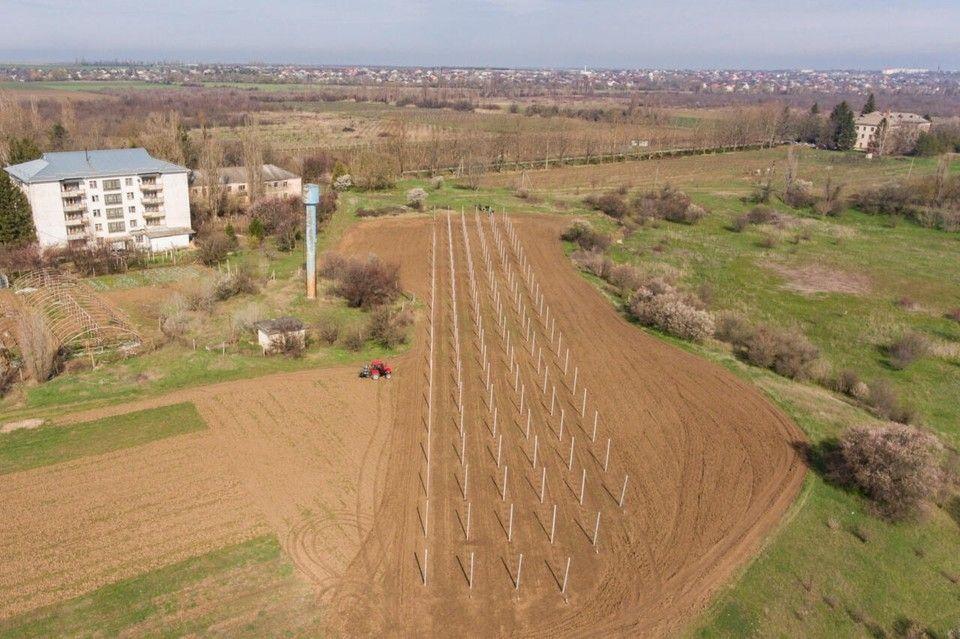 В Крыму появился экспериментальный яблоневый сад
