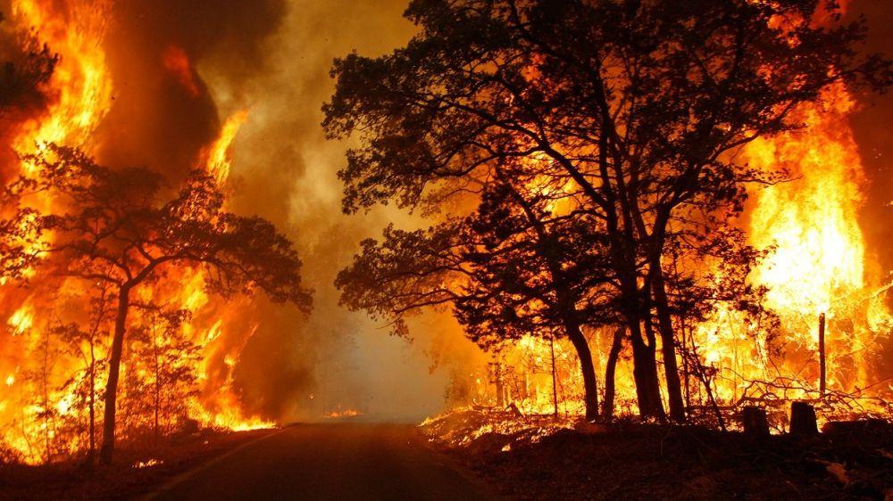 Пожарная безопасность в лесу (природные пожары)