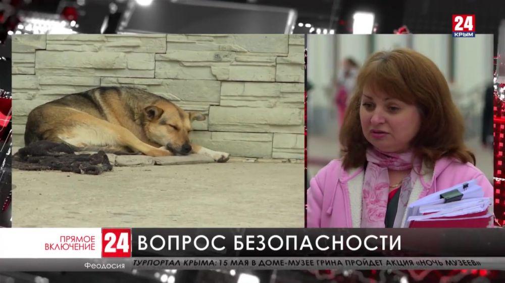 Жители Феодосии жалуются на бродячих собак