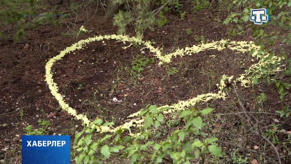 Застройщику Форосского парка дали 4 дня на уборку