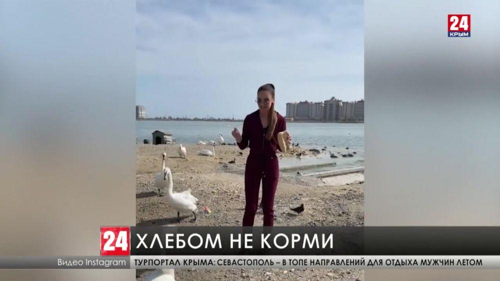 Неполезный завтрак. Певица Ольга Бузова покормила лебедей на Лебедином озере в Крыму