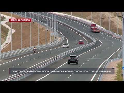 Переходы для животных могут появиться на севастопольском отрезке трассы «Таврида»