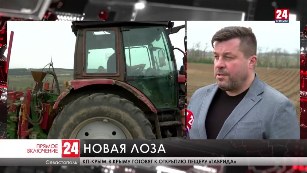 В Севастополе закладывают новые виноградники