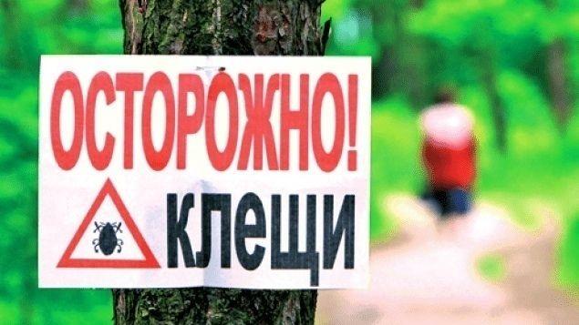 МЧС Республики Крым предупреждает: на полуострове начался сезон активности клещей