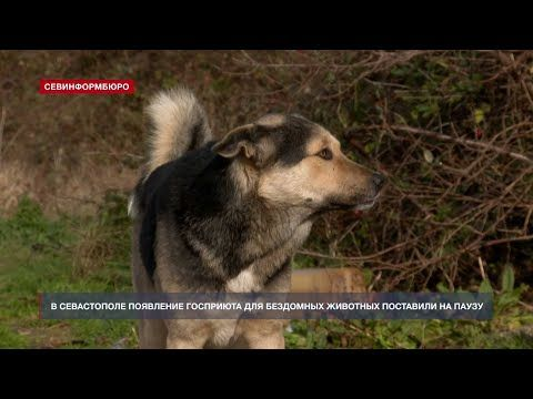 В Севастополе появление госприюта для бездомных животных поставили на паузу