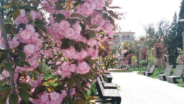 Цветущий Севастополь: куда отправиться на фотосессию