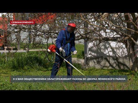 К 9 мая общественники облагораживают газоны во дворах Ленинского района Севастополя