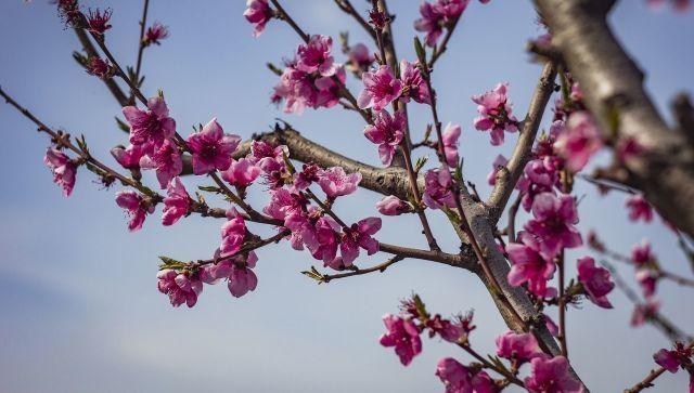 Цветение садов в Крыму с высоты птичьего полета - видео