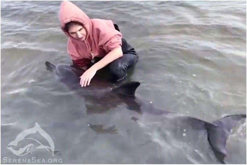 «Слишком больно это читать»: Как в Крыму спасали крошку дельфина