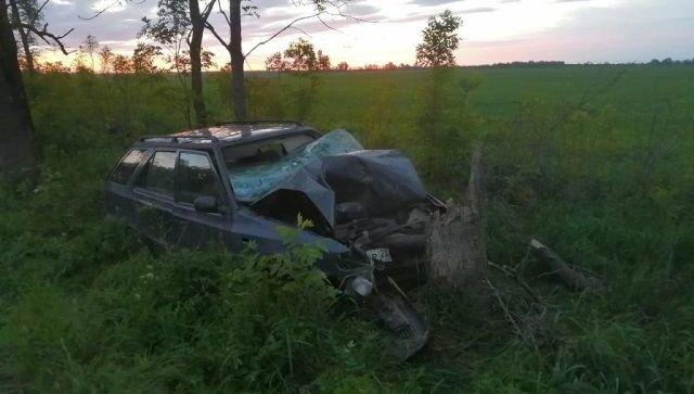 Снес дерево: в Краснодарском крае чудом выжил водитель без прав