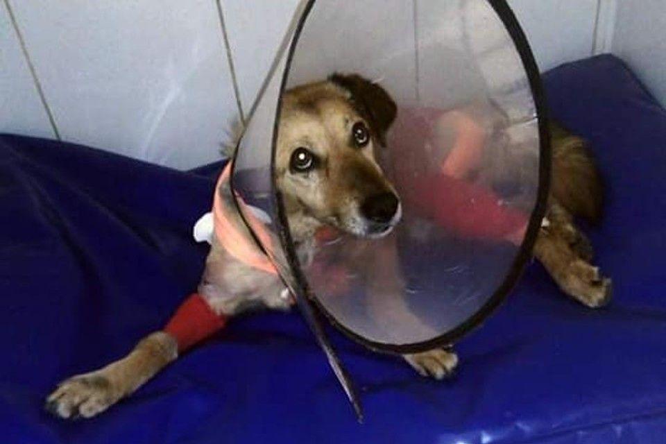 Симферопольцы объявили распродажу личных вещей для оплаты лечения пса с перерезанным горлом