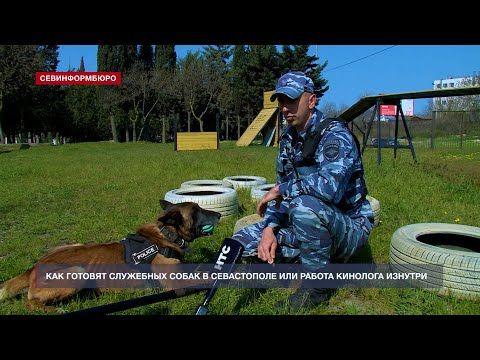 Как готовят служебных собак в Севастополе или все нюансы работы кинолога