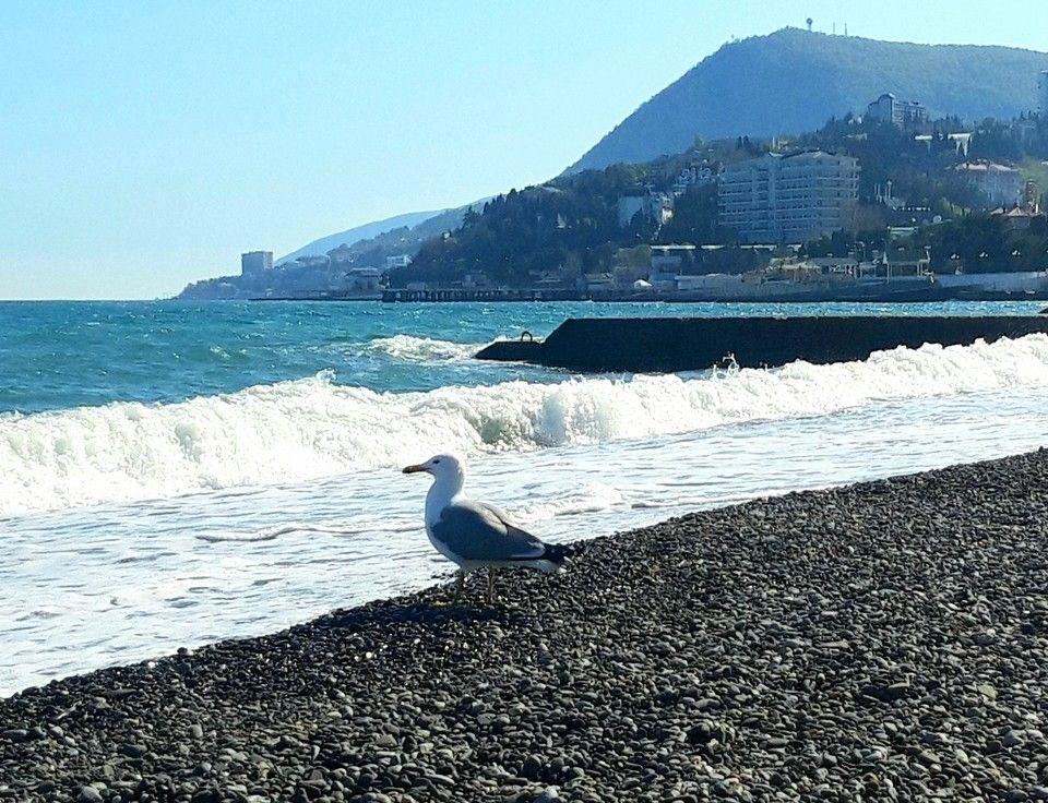 В курортном сезоне будут работать 460 пляжей Крыма