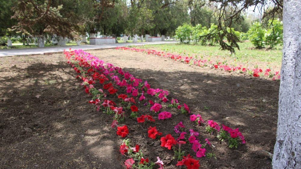 Керченский зеленхоз высаживает цветы и осуществляет покос травы