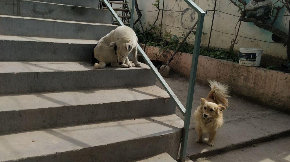 Специалистами межрайонного отдела ветеринарии «Западный» проведена внеплановая выездная проверка гражданки, содержащей собак на территории частного домовладения