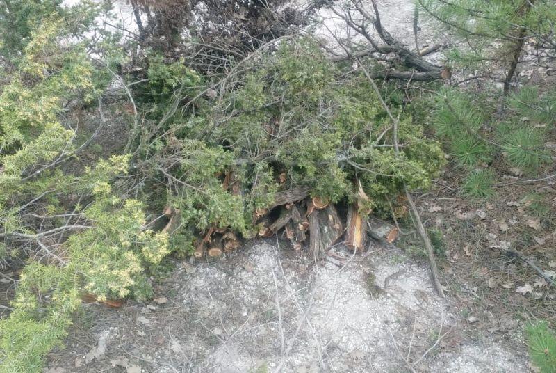 В Бахчисарайском районе участковый в одиночку задержал рубщиков можжевельника