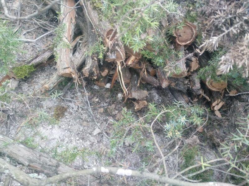 В Крыму участковый в одиночку задержал двоих «черных лесорубов»