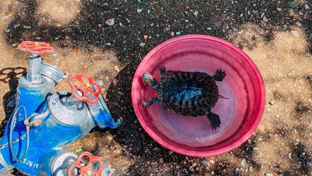 Родилась в рубашке: на пожаре в Севастополе спасли черепаху - видео