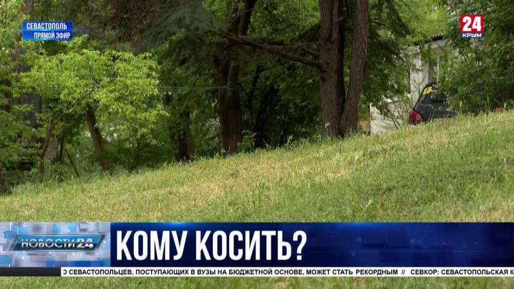 Севастопольцы жалуются на заросли травы во дворах