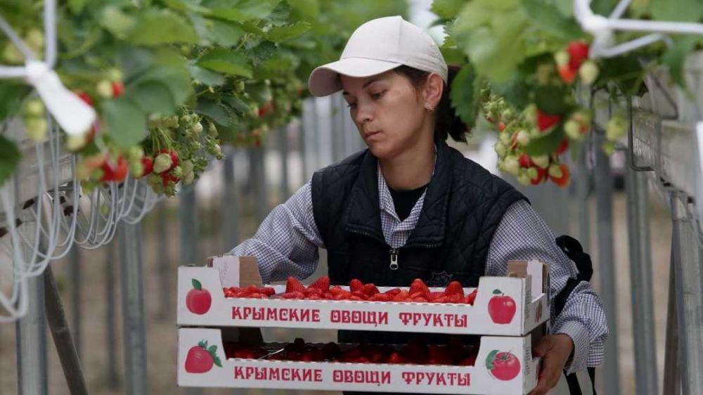 В Республике Крым запущен новый высокотехнологичный тепличный комплекс на скалах - Андрей Рюмшин