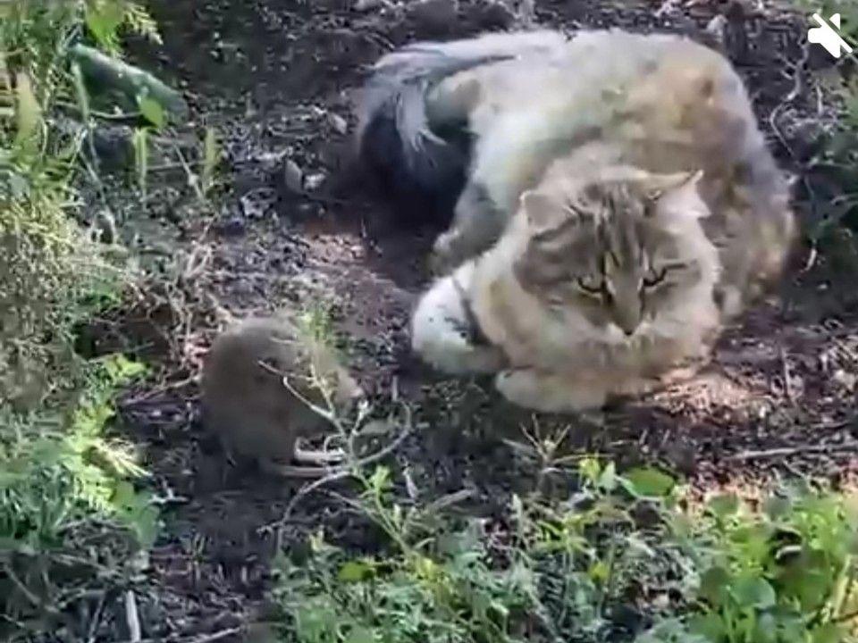 «Том и Джерри променяли Америку на Крым»: В соцсети появилось видео дружбы кота и мышонка