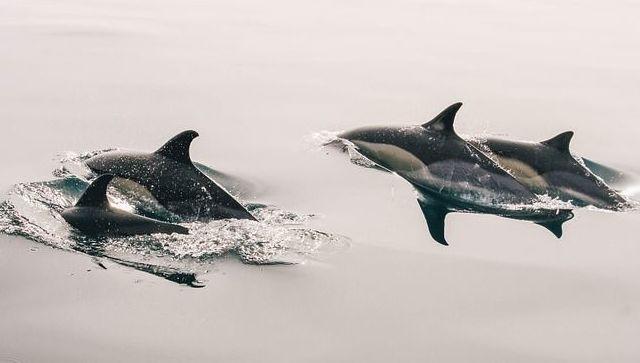 Выброшенного на мелководье дельфиненка спасли в Севастополе - видео