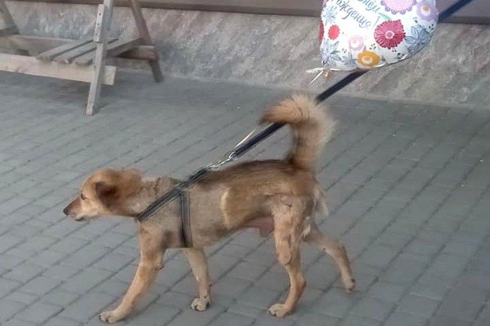 Пса с перерезанным горлом пытались выкрасть из передержки в Симферополе