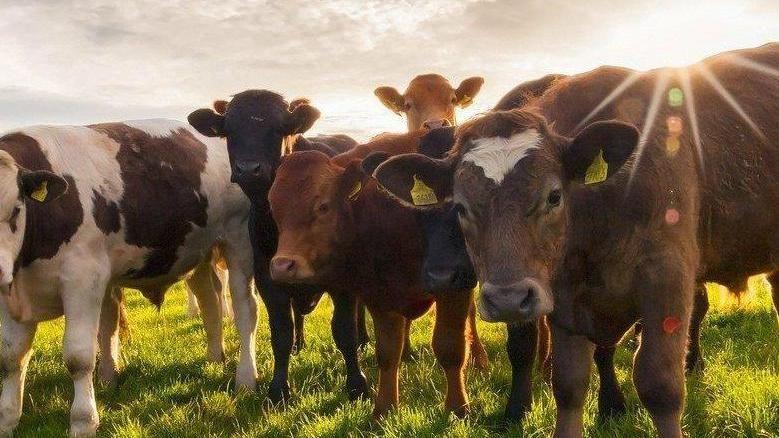 Специалисты отдела ветеринарии города Керчи и Ленинского района приняли участие в проверке КФХ по разведению крупного рогатого скота