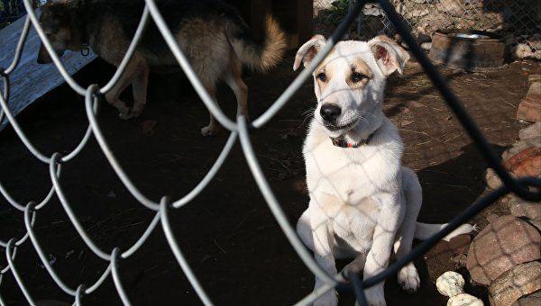 Открытие приюта для бездомных животных в Симферополе снова перенесли