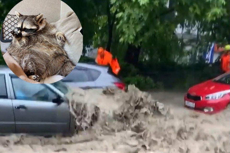 """""""Такой апокалипсис никогда не видела"""": самый популярный енот России застрял с хозяевами в затопленной Ялте"""