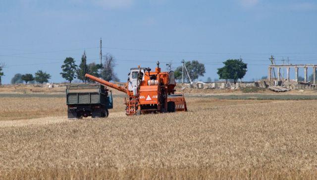 Как аномальные ливни повлияют на урожаи в Крыму - эксперт