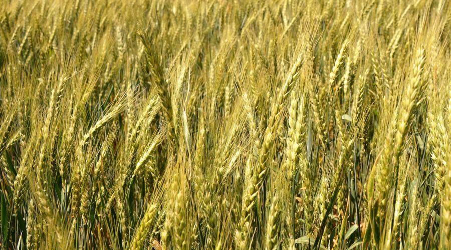 Минсельхоз заявил о гибели урожая на 122 га после потопа в Ленинском районе Крыма