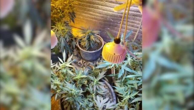 Охранник из Судака пытался продать полкило марихуаны
