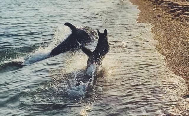 Где в Крыму можно увидеть дельфинов?