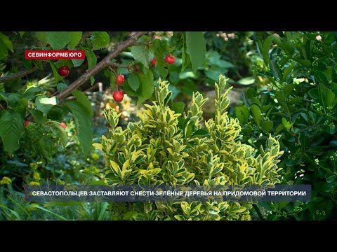 Севастопольцев заставляют снести зелёные деревья на придомовой территории