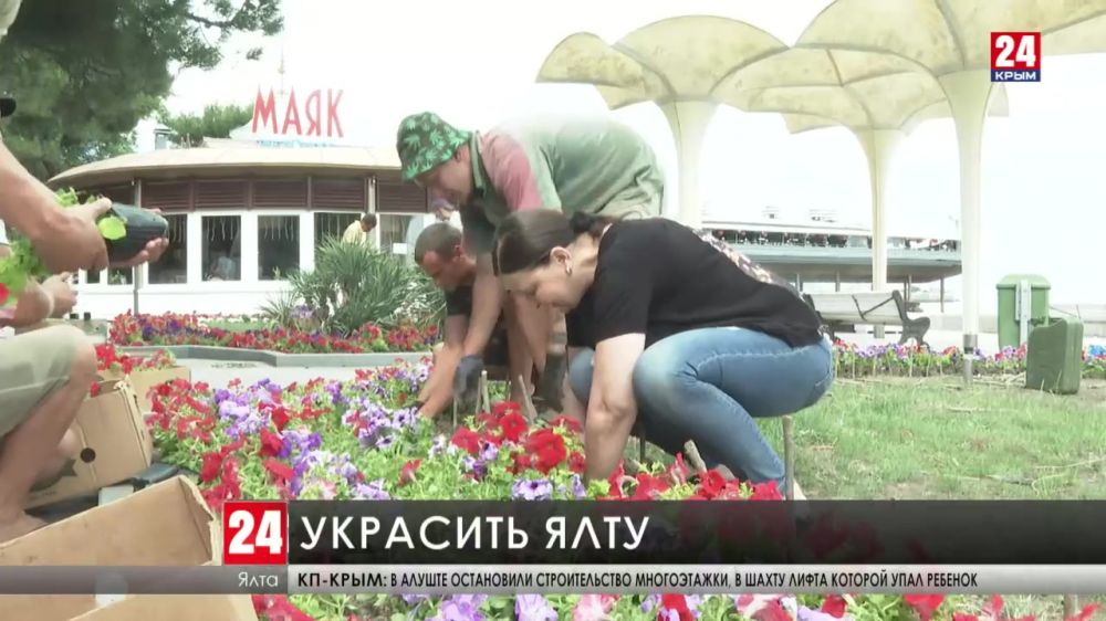 На набережной Ялты высаживают цветы